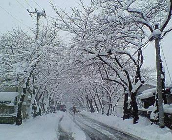 春の雪・・・