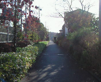 朝のお散歩♪♪♪♪♪♪