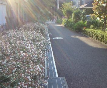 朝のお散歩〜♪