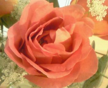 薔薇・・のように。