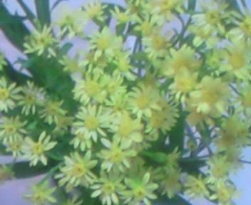 黄色い花〜☆