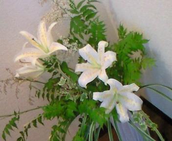 山百合の花が咲きました♪