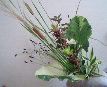 アジアンチックな花たち。