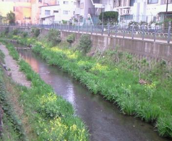 川辺の小路。