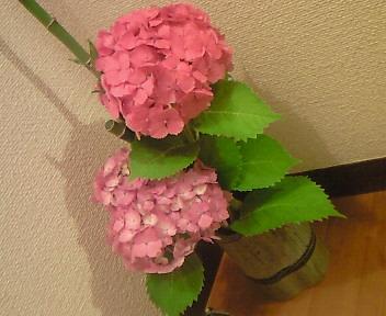 場に活ける〜紫陽花〜